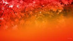Red Fall Abstract Wallpaper