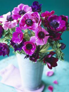 purple anemones. Am just loving purple & aqua together!