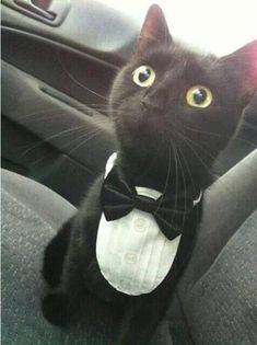 #Cats  #Cat  #Kittens  #Kitten  #Kitty  #Pets  #Pet  #Meow  #Moe  #CuteCats  #CuteCat #CuteKittens #CuteKitten #MeowMoe      All dressed up and now wear to go. ...   http://www.meowmoe.com/45050/