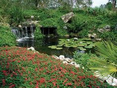 #Kanapaha #Botanical #Gardens, #Gainesville, #Florida.  http://www.GainesvilleFloridaHomes.com  Contact Mark Cohen, #Realtor & #Broker, #MarkCohen  #Home  #House  #Condo  #Land  #RealEstate  #Property  #ForSale  #Eyemark