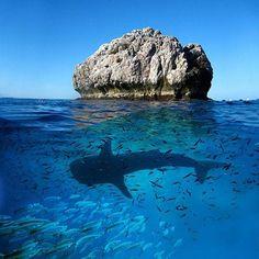 Sail Rock - Koh Phangan things to do in thailand, thailand travel Khao Lak Beach, Vida Animal, Koh Phangan, Koh Tao, Underwater World, Thailand Travel, Thailand Destinations, Ocean Life, Marine Life