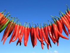 Bird's-Eye chillies(sometimes referred to as 'Thai chillies') are one of the top 20 Sirtfoods. Bird's-Eye chillies are known for weight reducing qualities. Beat The Heat, Fast Metabolism, Spicy Recipes, Spice Things Up, Health And Wellness, Cravings, Healthy Living, Spices, Nutrition