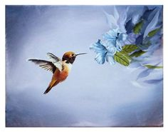 """""""Hummingbird with Blue Hibiscus Flowers"""" by Velvet Tetrault, Waddell // The original painting is an 11' x 14' acrylic painting on canvas. It shows an orange and red hummingbird in flight, hovering near blue hibiscus flowers. // Imagekind.com -- Buy stunning fine art prints, framed prints and canvas prints directly from independent working artists and photographers. Available at http://VisualGemsStudio.ImageKind.com"""