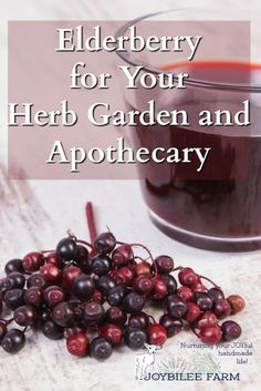 Elderberry and elderflowers are prime herbal assets to add to your herb garden for DIY herbal apothecary projects and personal care recipes. Plant a few.