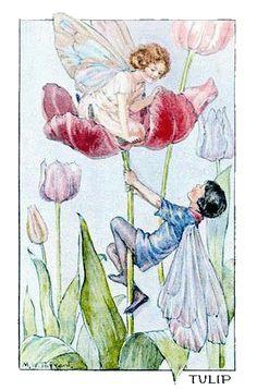 fairyflower_tarrant_flower_tulip.gif  (350 x 531 x 256) (121121 bytes)