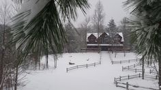 Blue Mountain Lodge #vacationrental #cabin in the #SmopkyMountains through snowy pine boughs  in January