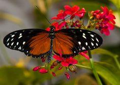 beauty in a butterfly