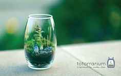 The totorrarium  By theWesleyChan  from Wong Fu Productions.   Very Neat Totoro  :)