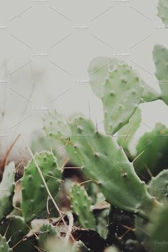 Beautiful Cactus by Rene Jordaan Photography on @creativemarket