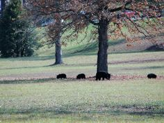 Momma and babies in front of industrial park in Sevierville, TN