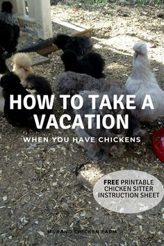 It's summer and I know you want a vacation, but if you have chickens it's not that easy to just pick up and go. Here is advice from a chicken farmer on how to go on vacation even if you have backyard chickens. Plus, a free chicken sitter printout. Diy Chicken Coop Plans, Best Chicken Coop, Backyard Chicken Coops, Building A Chicken Coop, Diy Chicken Waterer, Small Chicken Coops, Chicken Garden, Chicken Feeders, Raising Backyard Chickens