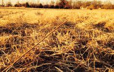 Winter Straw January 28, 2014