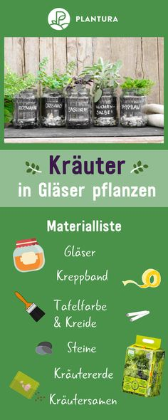 Kräuter im Glas pflanzen: Video-Anleitung & Tipps – Plantura Planting herbs in glasses: a herb garden on the windowsill? We'll show you how you can easily and even decorative plant herbs in glasses and what you need for them.