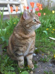 Shy Cat | Pawshake New farm