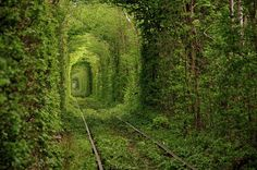 """Tunel del Amor~, Ucrania Giant trees surround this old train tunnel located in Kleven, Ukraine. The magical-looking place is nicknamed """"The Tunnel Of Love"""" by locals because it is a popular spot for couples to visit Beautiful Places In The World, Places Around The World, Oh The Places You'll Go, Places To Travel, Places To Visit, Amazing Places, Tourist Places, Amazing Things, Travel Destinations"""