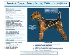 Helpful chart - maybe now the groomer will stop leaving our airedales legs so fluffy that it looks like he has pantaloons on!