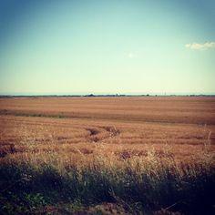 Grano, entroterra ravennate - Instagram by @cerviaemilanomarittima
