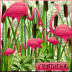Pink flamingo in the cat tails