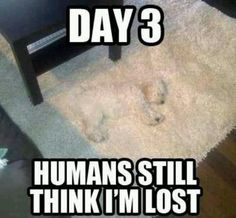 Check out: Animal Memes - Still lost. One of our funny daily memes selection. We add new funny memes everyday! Bookmark us today and enjoy some slapstick entertainment! Funny Animal Jokes, Funny Dog Memes, Really Funny Memes, Cute Funny Animals, Funny Animal Pictures, Cute Baby Animals, Haha Funny, Funny Cute, Funny Dogs
