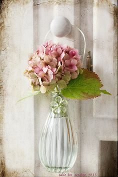 Single hydrangea blossom, so lovely! - via ana-rosa - source Fresh Flowers, Pretty In Pink, Pink Flowers, Beautiful Flowers, Purple Roses, Pale Pink, Ikebana, Hortensia Hydrangea, Pink Hydrangea