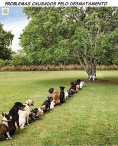 Problemas causado pelo desmatamento