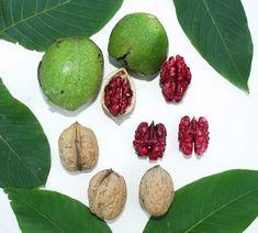 ořešák, ořech, odrůdy, výběr, zahrady, papírky, kamenáče Plant Leaves, Flora, Plants, Plant, Planting