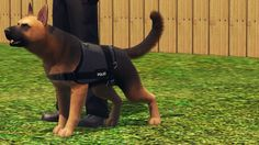My dog caesy in sims 3 she used to be a military dog and was rescued by the fire station. Thank you fire department! Sims 3 Mods, Sims Cc, Military Dogs, Police Dogs, Pet Dogs, Dogs And Puppies, The Sims 3 Pets, Dutch Warmblood, Sims Four