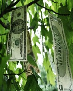 Don't we all wish...money grew on trees.