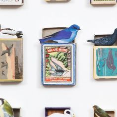 Detail from a Framed Bird Collage by Andrew Malone