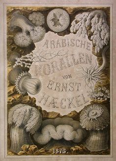 Ernst Haeckel's drawing of corals
