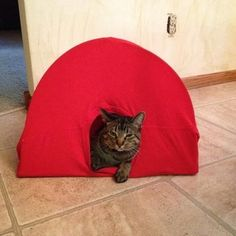 old cat care Shelters Diy Cat Tent, Dog Insurance, Old Cats, Cat Toys, Best Dogs, Diy Projects, Pets, Shelters, Pictures