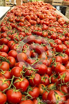 Tomatoes Provence Street Market - Download From Over 24 Million High Quality Stock Photos, Images, Vectors. Sign up for FREE today. Image: 41110017