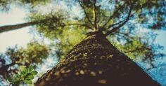 Kivimetsässä: Luonto on paras maadoittamo