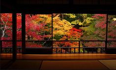 Japanese autumnal colour