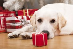 Free, Cheap & Homemade Gifts for Pets