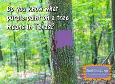 A couple of weeks ago, we went to visit my sister and her husband out on their weekend farm in Groveton, Texas. And while we were on the 4-wheelers bouncing across the acreage, I noticed lots of trees on adjoining properties with purple paint smeared on their bark.   #Small Town History