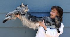 A 6-year-old fluffy feline from Reno, Nev., is the certified longest cat in the world. Stewie, a Maine Coon, measures 48.5 inches long from the tip of his nose to the end of his tail bone.