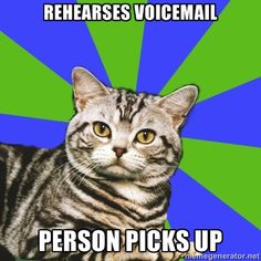 Introvert Cat -- ahh instant awkwardness. Haha this is so me :)