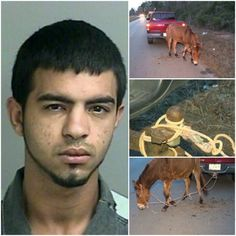 Man Drags Donkey Behind His Truck For Three Miles, Says There's Nothing Wrong With That! Demand Punishment! | PetitionHub.org