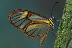 Shahira Hammad - Excessive III: Diaphanous Wings