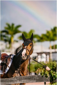Show Jumping Horses, Show Horses, Horse Photos, Horse Pictures, Cute Horses, Beautiful Horses, Horse Adventure, Animal Experiences, Horse Wallpaper