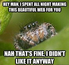 The Misunderstood Spider