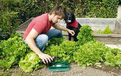 Ako sa zbaviť slimákov v záhrade.