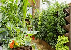Viherseinien ja kasvatuslaatikoiden ansiosta pieneen tilaan mahtuu kelpo keittiötarha. Viherseinän voi asentaa terassille, parvekkeelle ja vaikka aitaan. Myös sisälle tarkoitettuja malleja on myynnissä. viherpiha.fi