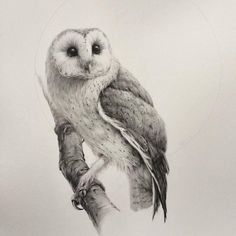 absolutely stunning barn owl drawing from artist...
