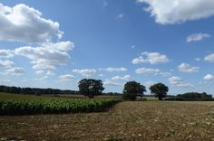 A Circular Walk in Marlesford - Postcard from Suffolk Farm Cafe, Farm Shop, Old Vinyl Records, Walk Out, Sky And Clouds, Beautiful Day, Places Ive Been, Fields, Things To Do