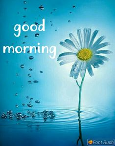Looking for for images for good morning sunshine?Browse around this website for perfect good morning sunshine inspiration. These amuzing pictures will brighten your day. Cute Good Morning Images, Good Morning Cards, Happy Morning, Good Morning Greetings, Morning Pictures, Morning Wish, Morning Coffee, Good Morning Dear Friend, Good Morning Roses