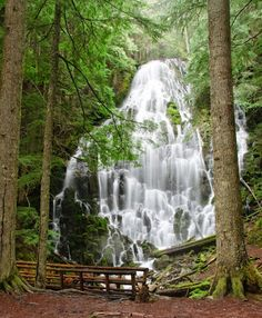 Google+Ramona falls, Mt hood