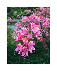 "flower overdose on Instagram: ""pink is a mood. . . . . . . . . . . . . . . . . . . . #gardenflowers #beautifulflowers #flowers #flower #nature #garden #flowerpower…"" Over Dose, Flower Power, Beautiful Flowers, Mood, Garden, Nature, Plants, Pink, Instagram"