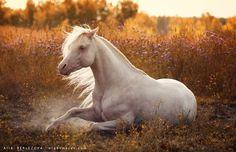 (80) Love horses - Photos